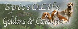 spiceolife golden retrievers Cavalier King Charles Spaniels logo